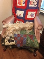 Holly sleeping in chair