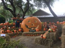 Pumpkins at Canyon Lake 2019